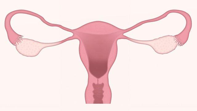 ilustración-de-utero-femenino